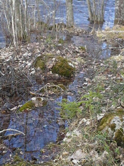 Tämän on puro luonnossa vesi menee järven