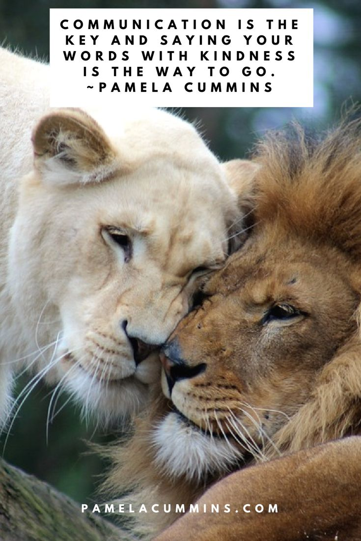 Everlasting Love Quotes 33 Best Love & Relationships Quotes Images On Pinterest  Psychics