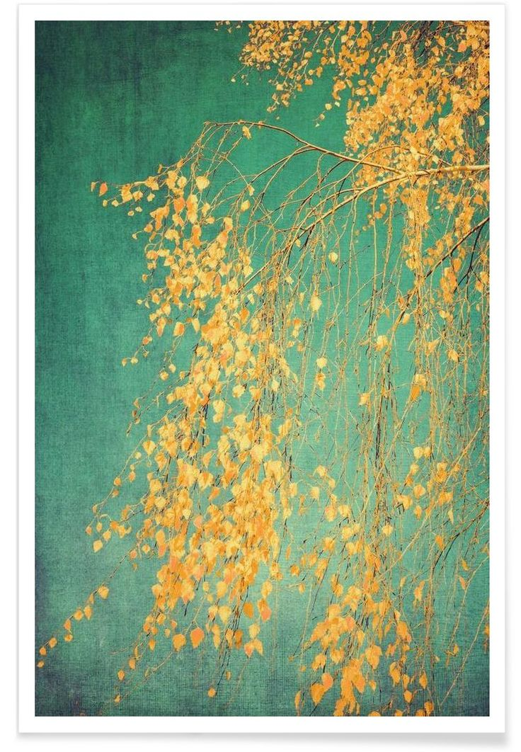 Whispers of Yellow als Premium Poster von Ingrid Beddoes | JUNIQE