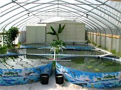"""Sustainable food production. Tilapia farm. """"I currently have in my backyard, a facility that I designed and built myself, that is capable of producing about 2000 pounds of tilapia per year. That is over 38 pounds of fish per week!"""