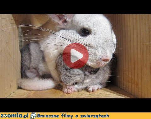 Mama to mama « Inne zwierzęta « Śmieszne filmy o zwierzętach - śmieszne koty, śmieszne psy. Zoomia.pl :: Zoomia pl