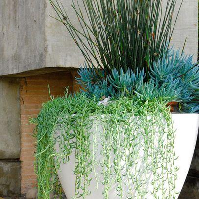 108 Best Plants For Modern Garden Images On Pinterest 400 x 300