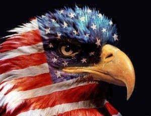 The symbol of america, our bald eagle #bald #eagle #symbol
