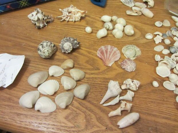 Sort the shells and design your crown