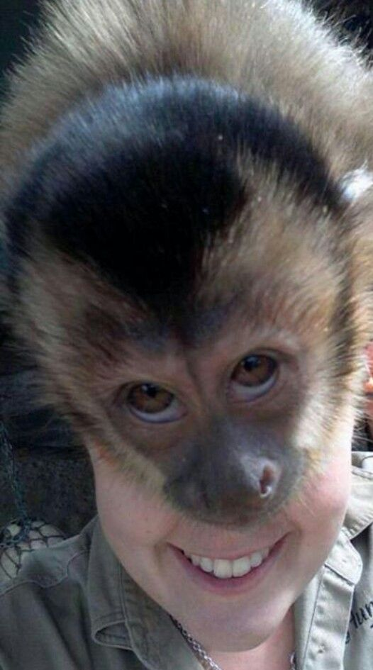 Perfectly Timed Photo -- all you need is a monkey on your back!