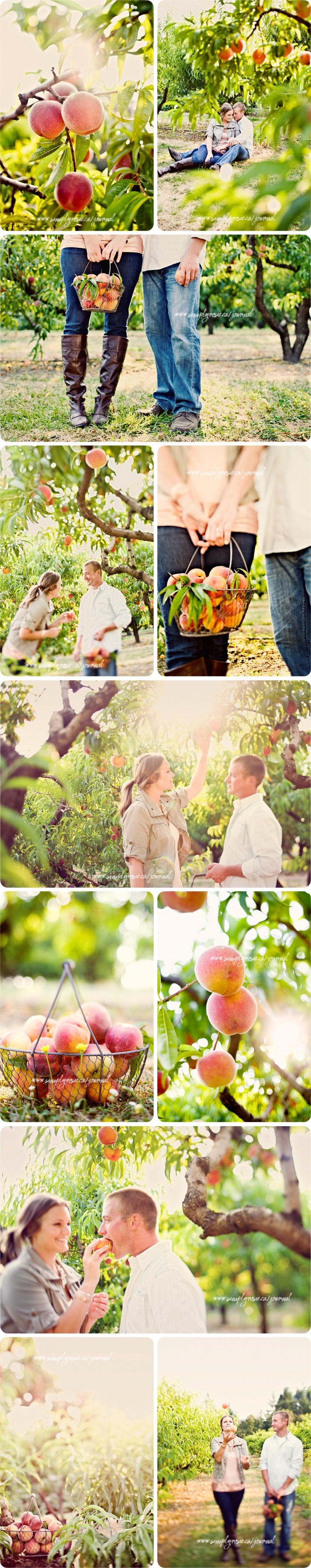 Amazing peach orchard shoot.  I want the color feeling to be exactly like this. :)