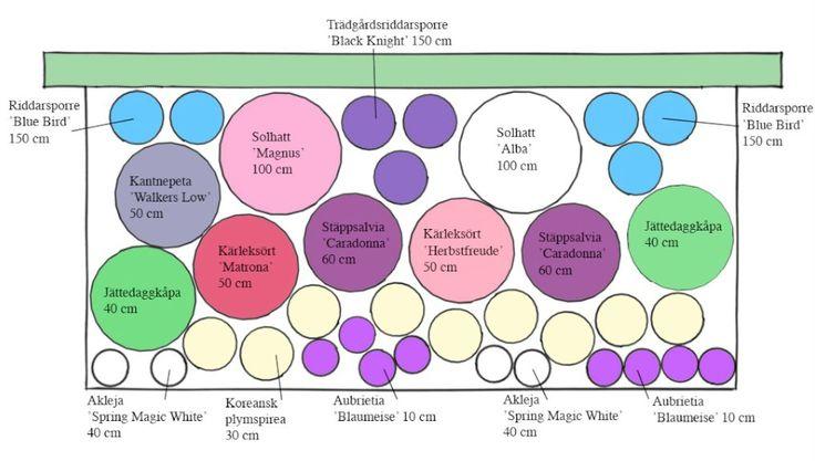 Klassisk perennrabatt med populära sorter - perenner.se