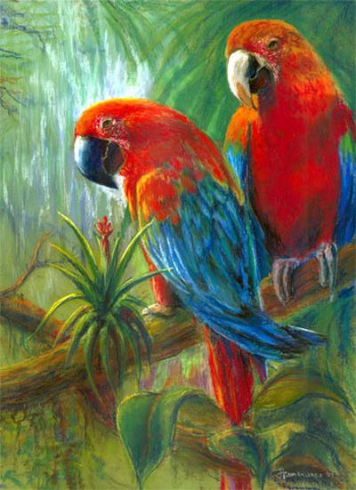 Parrots - Pastel by Jane Romanishko