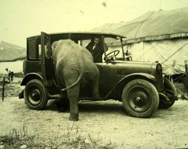 You never get to see elephants going for a Sunday drive anymore.