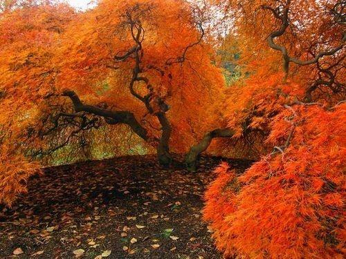 Fall at the Biltmore estate in NC