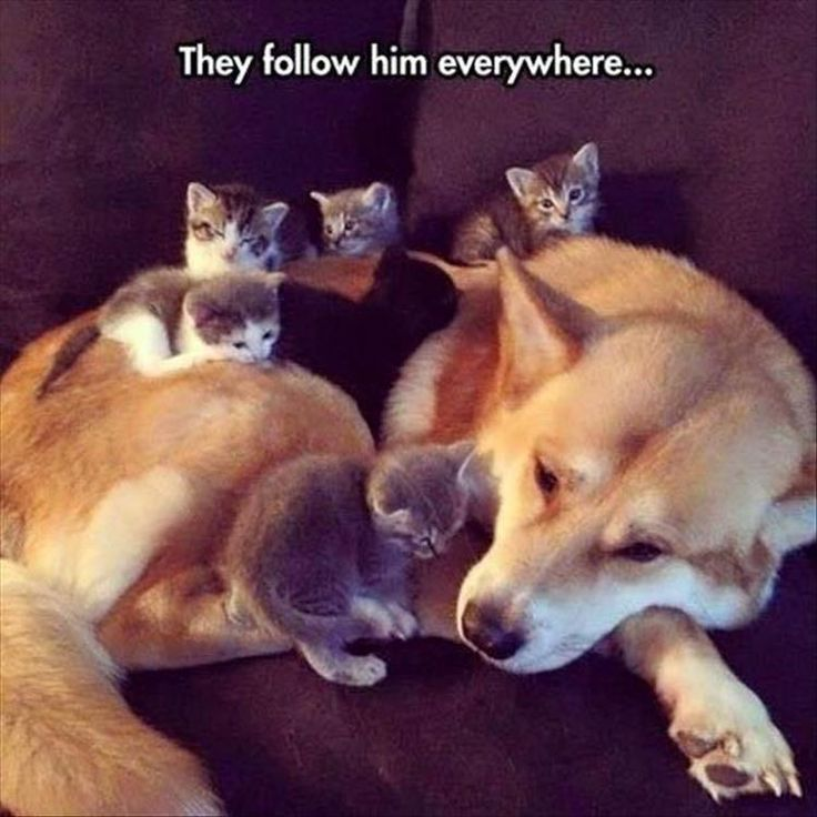 19 Funny Animal Pics for Your Wednesday   Love Cute Animals