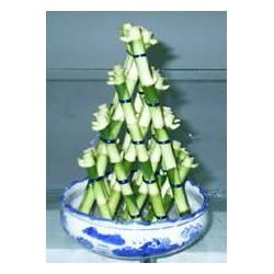 China Pyramid Shape Lucky Bamboo for sale