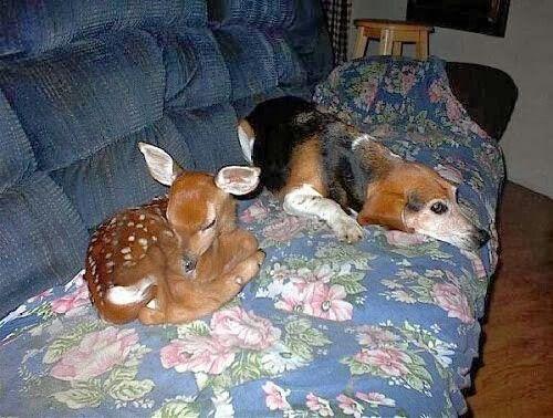 Mejores 652 imágenes de Fun Loving Animals en Pinterest | Animales ...