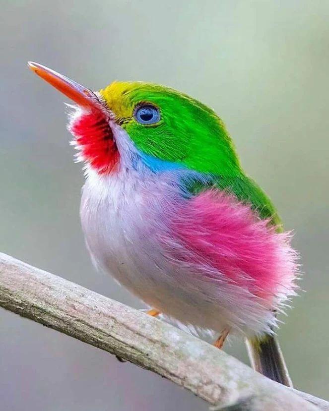 день название и картинки птиц самых красивых птиц работа