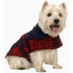 Dog Winter Clothes   ...........click here to find out more     http://googydog.com              ...... P.S. PLEASE FOLLOW ME IN HERE @Emily Schoenfeld Schoenfeld Wilson