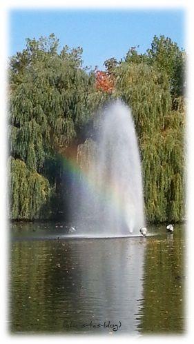 Regenbogen am Bleichweiher