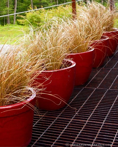 29 best images about on deck on pinterest planters for Ornamental grass in containers for privacy