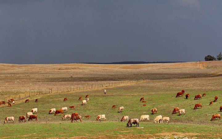 Gli allevamenti fra le steppe di Castro Verde