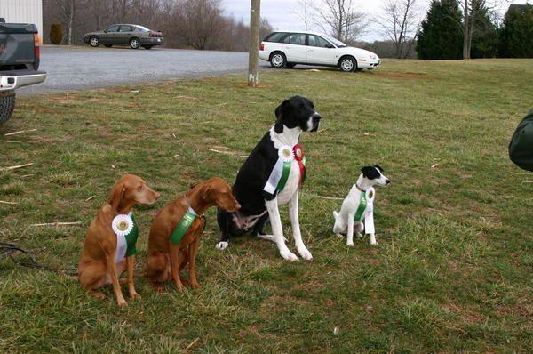 Mt Vernon Dog Training Club Dog Training Dogs Animals