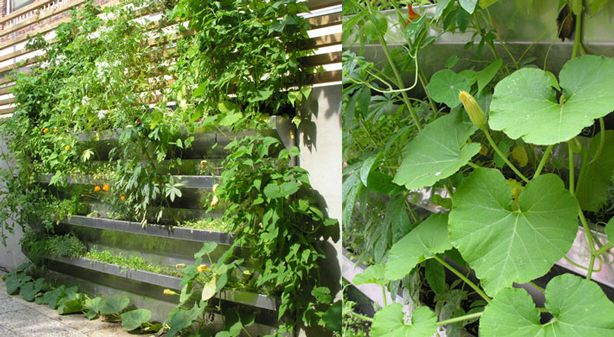 Vertical Vegetable Garden Rises in Style