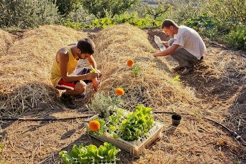 L'orto sinergico è l'orto più naturale che si possa fare, ancor più di quello biologico! Ecco come realizzarlo...