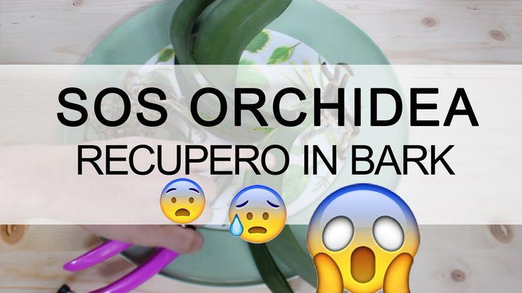 SOS ORCHIDEA - Recupero in Bark