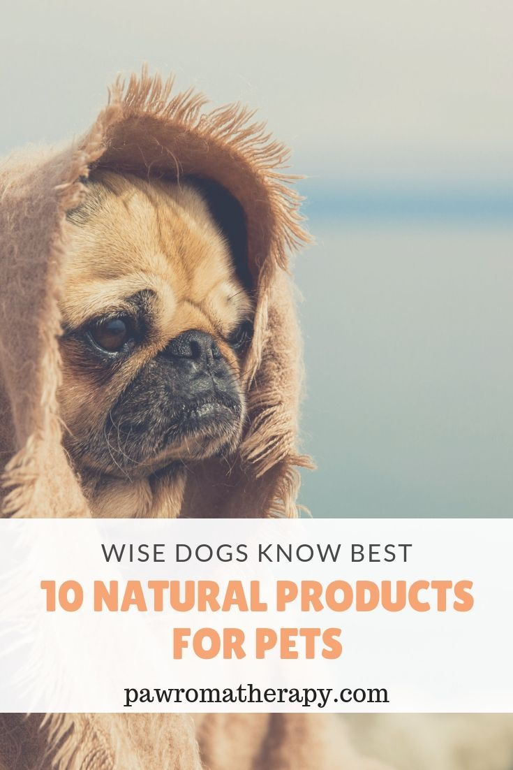 Holistic Veterinary Blog Natural Pet Pets Cute Animal Pictures