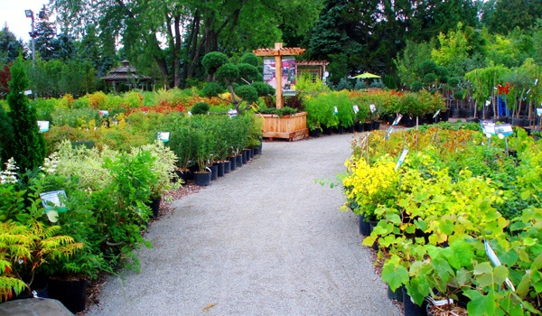 25 Unique Plant Nursery Ideas On Pinterest Nursery Near Me Plants Glass House Garden And