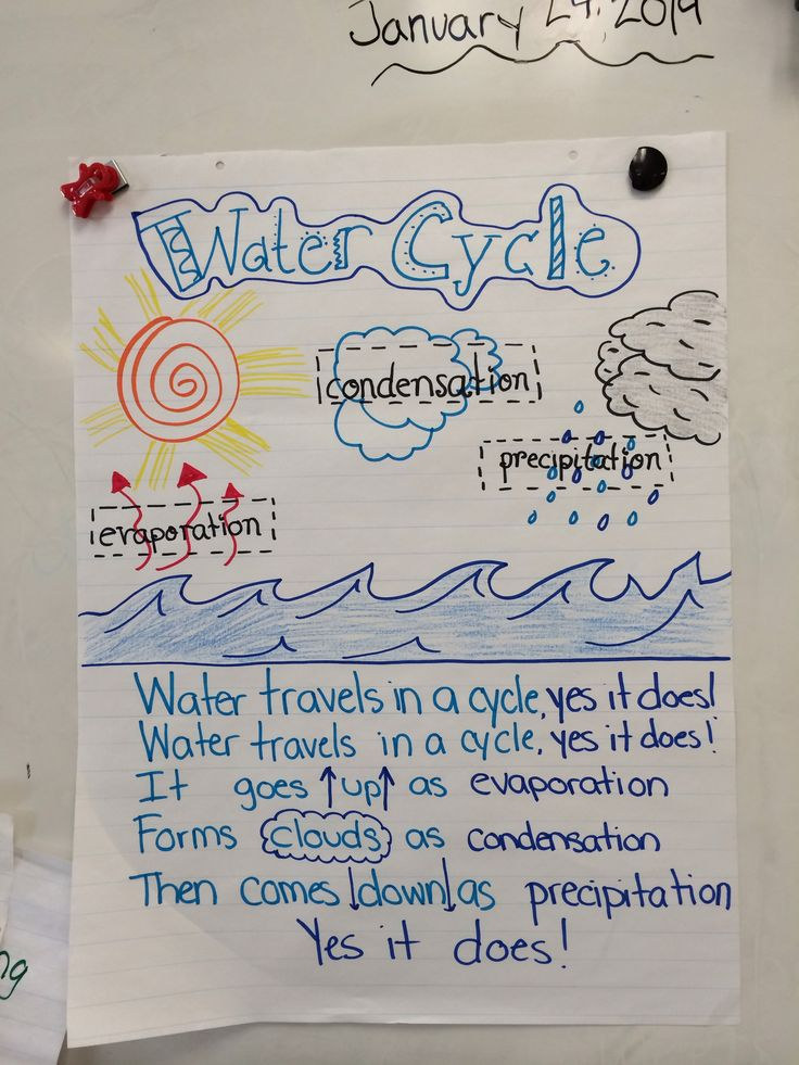Water Cycle Anchor Chart Science Pinterest Anchor