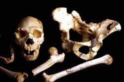 Atapuerca foto. Algunos de los restos más emblemáticos procedentes de la Sima de los Huesos, atribuidos a la especie 'Homo heidelbergensis'