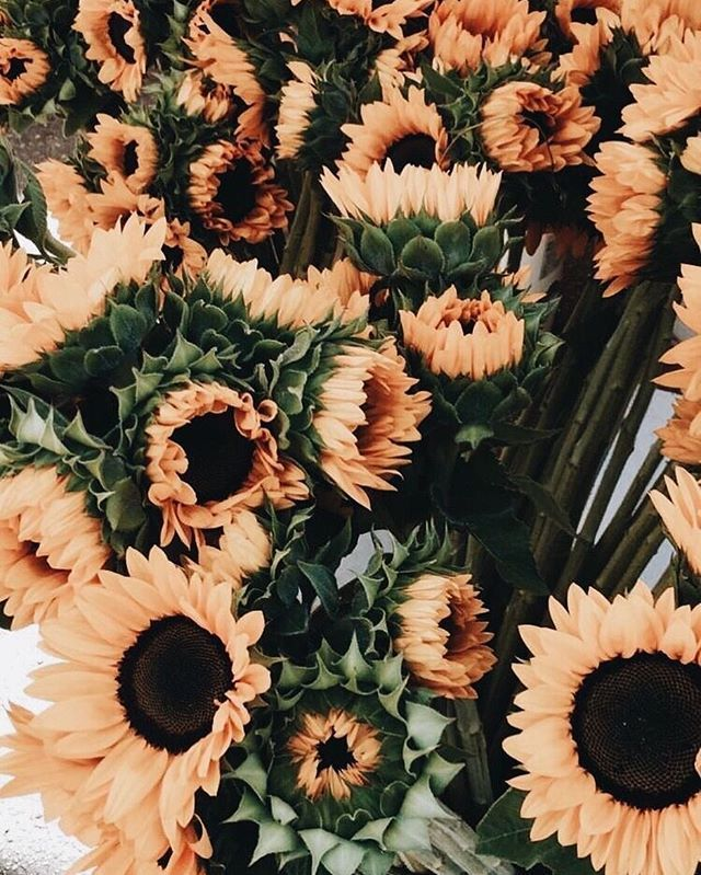 Let Us Dance In The Sun And Wear Wild Flowers In Our Hair Lifeclothingco Sunflower Wallpaper Flower Aesthetic Flower Wallpaper