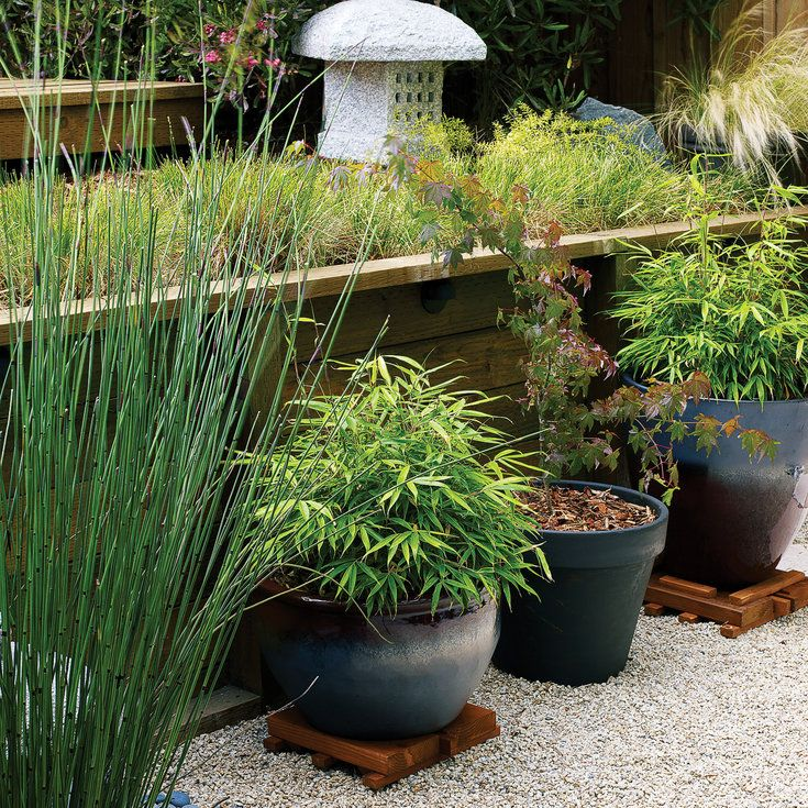 Potted bamboo and maples - Cool Container Gardens - Sunset