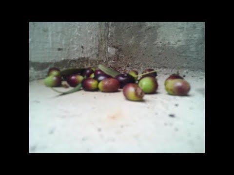 Olives-Dimdimi