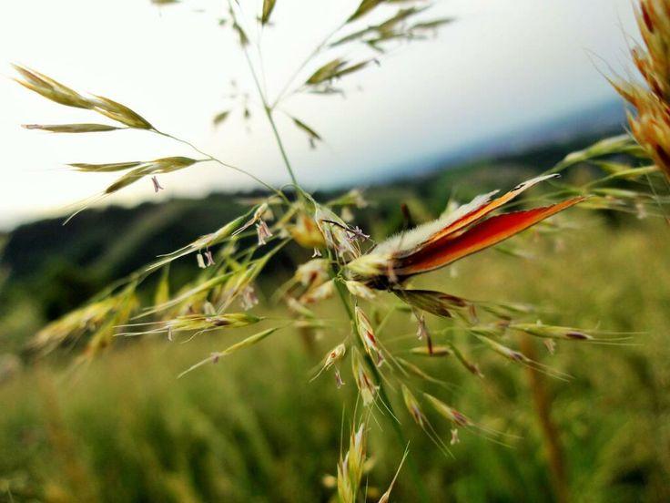 Foto scattata da Jelena Kuznecova con QX10.