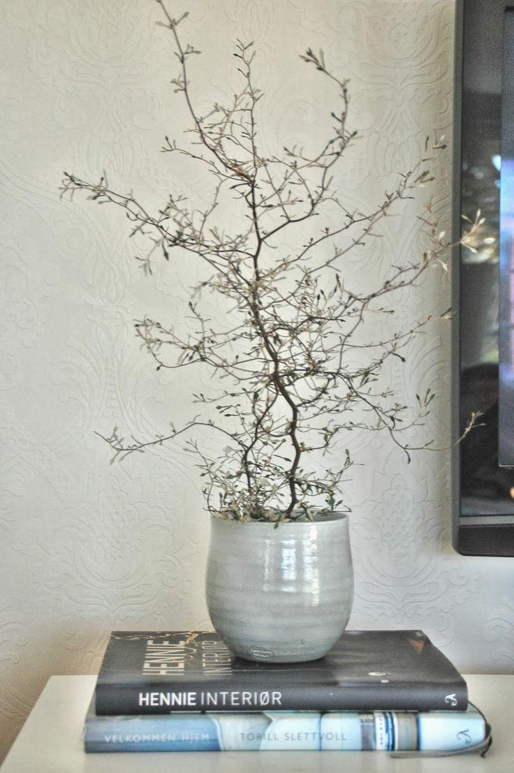 corokia plante  Google Search  GREENS  Indoor plants