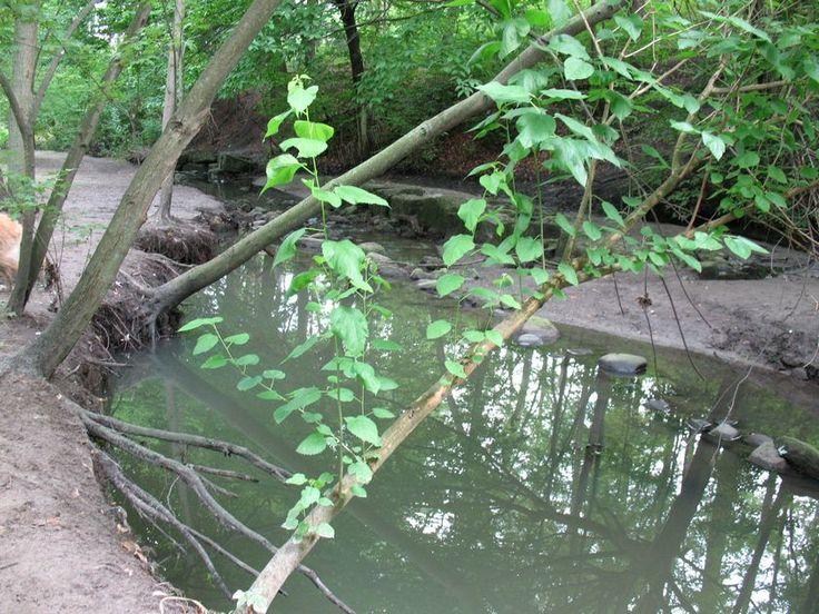 High Park miscellaneous pictures