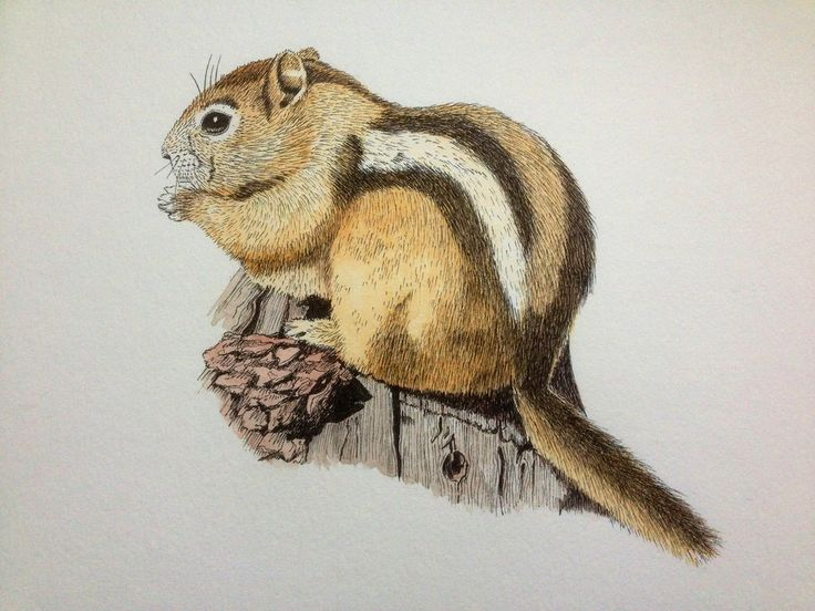 96 Best Chipmonk Sketches And Paintings Images On