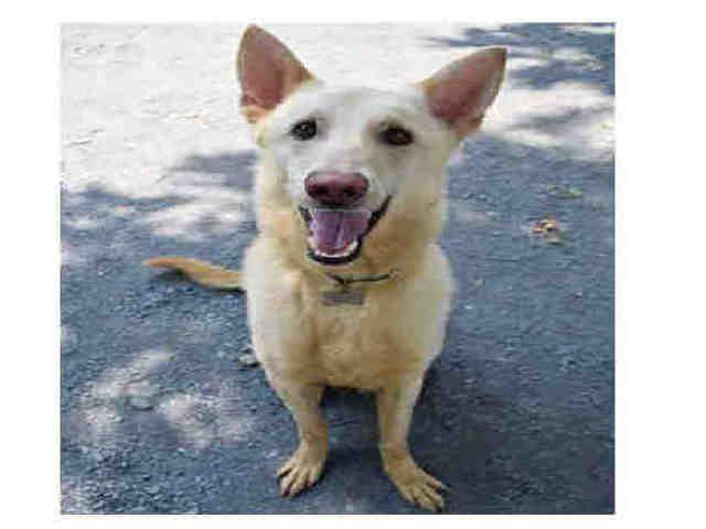 Www Petharbor Com Pet Fltn A496019 Dog Adoption Animals Dogs