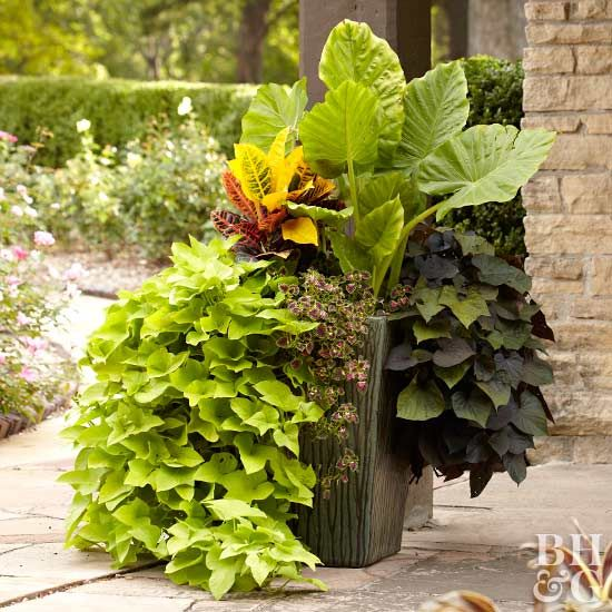 Use These Tropical Plants To Transform Your Patio Plants Tropical Plants Patio Flower Pots