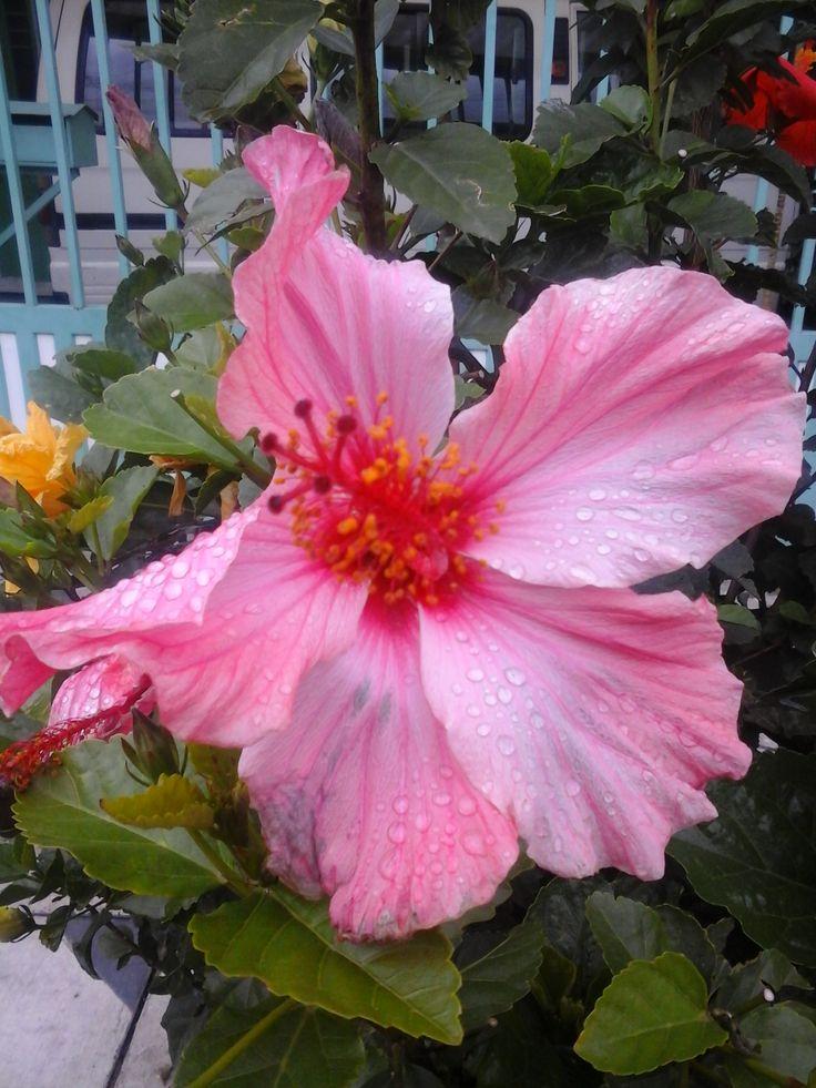 flor de jardin Bogotá