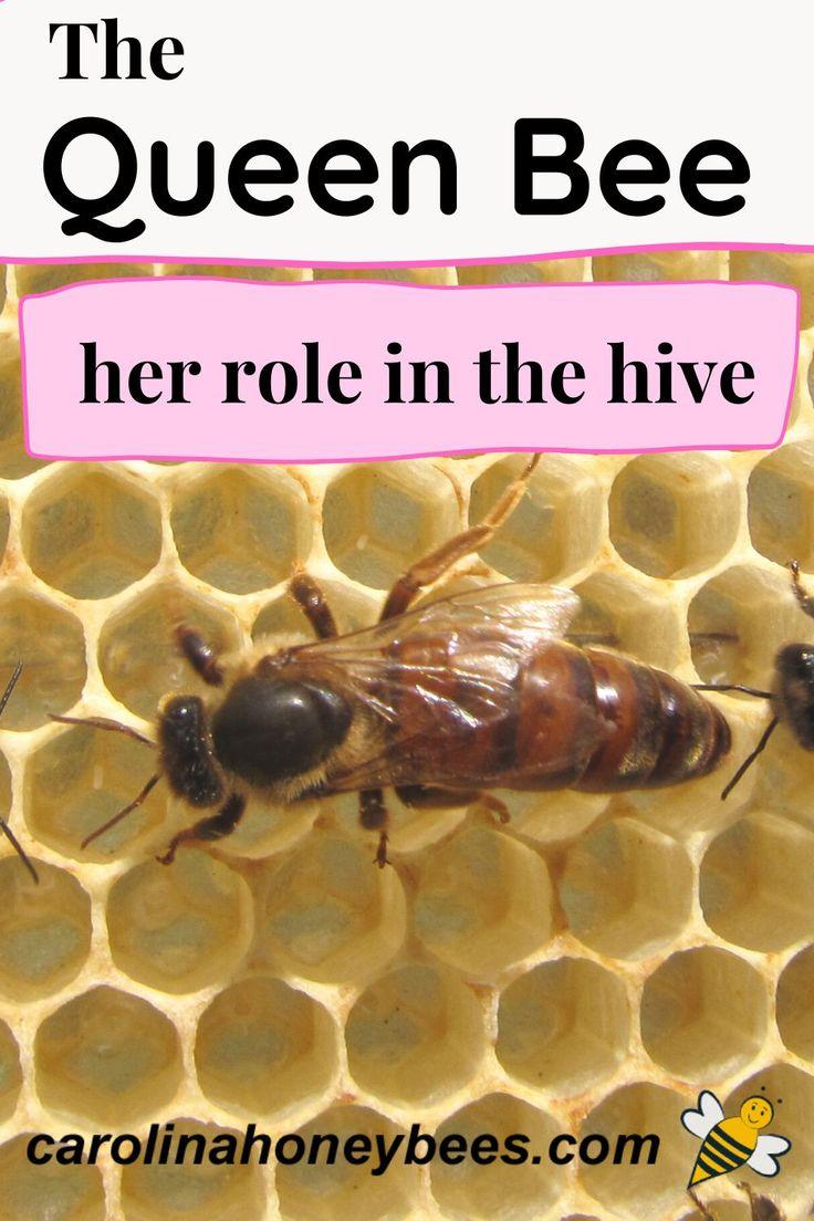 d806d97e5b729b42026d9128800ef1ee - How To Get Rid Of Bee Hive In Attic