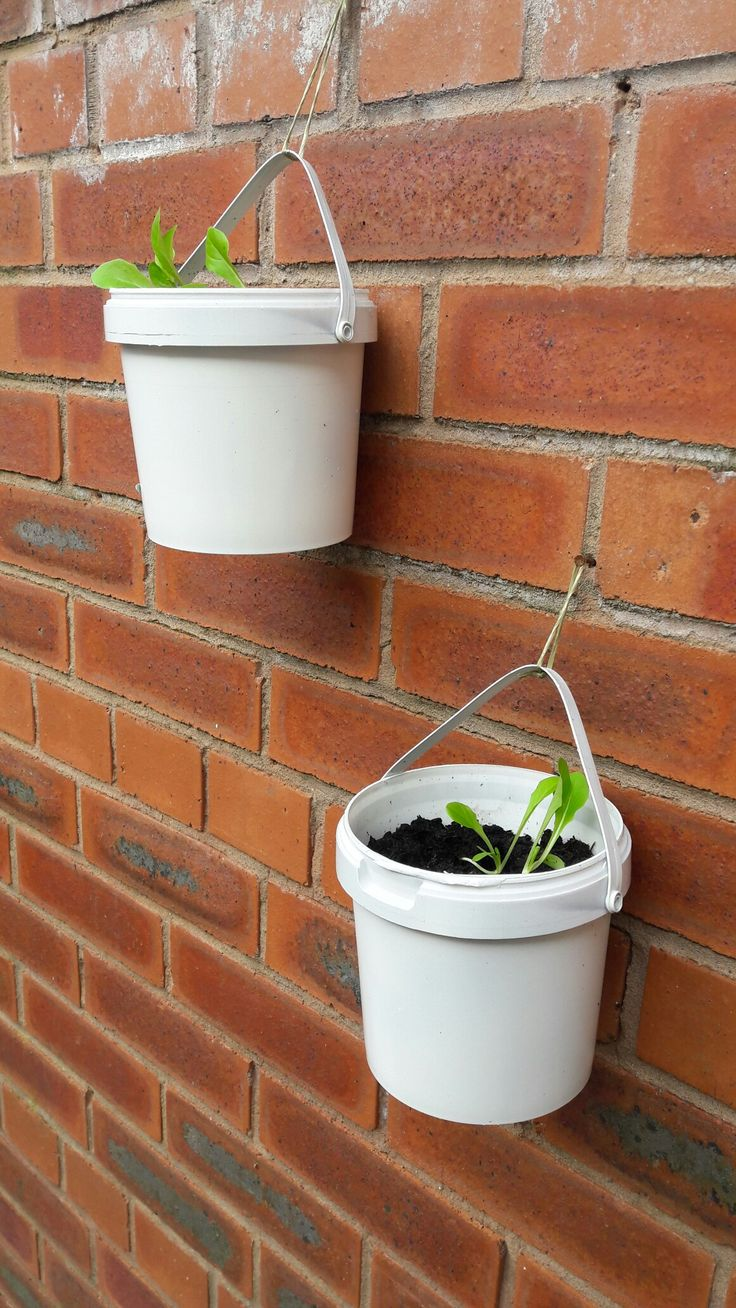 Lettuce growing in repurposed painted yoghurt buckets, hanging from the yard wall safely out of reach of slugs!