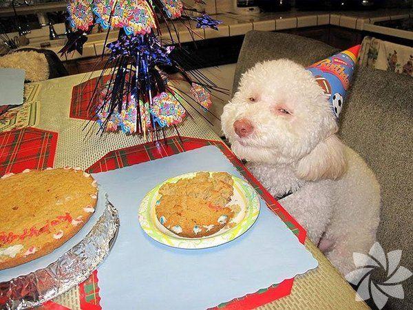 Hayvanlar da doğum günü kutlar