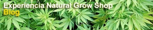 Mediante el Blog, solucionamos dudas, hablamos sobre todo lo relacionado con el cultivo de marihuana. Presentamos cada banco y sus variedades, hoy en nuestra tienda tenemos entre otros: Barney's Farm, Sweet Seeds, Green House Seeds, Buddha Seeds, Eva Seeds, Dinafem, Pyramid, Sensi Seeds, Kannabia seeds, Lowlife, Joint Doctors, Cannabiogen, Dutch Passion, Advanced Seeds, Paradise Seeds, Serious Seeds, TH Seeds, Medical Seeds, Big Buddha Seeds, Royal Queen Seeds, Ministry of Cannabis…