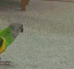 Funny bird deserves an Oscar