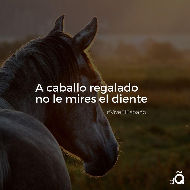 """""""A caballo regalado no le mires el diente! #Spanish #SpanishProverbs"""