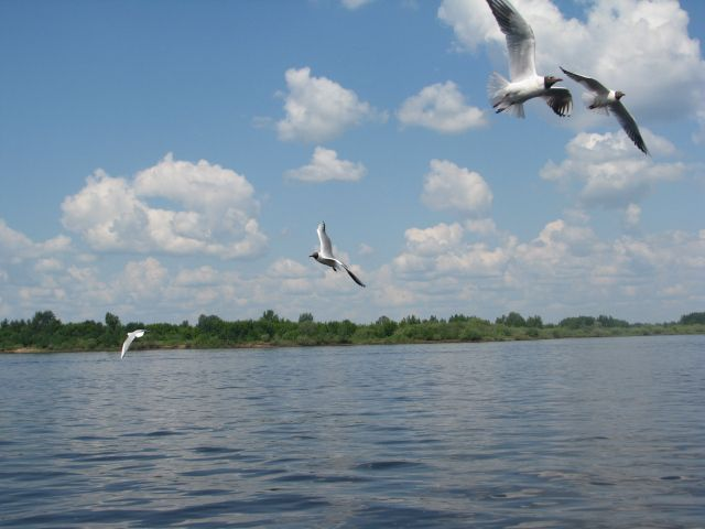 A river boat tour is an excellent way to enjoy the peaceful beauty of the Volga River in Nizhny Novgorod, Russia.