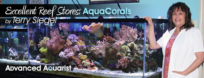 Soft Corals For Sale: Tank Raised Aquacultured Soft Corals, Hard Corals, Inverts and Saltwater Reef Fish For Home Aquariums