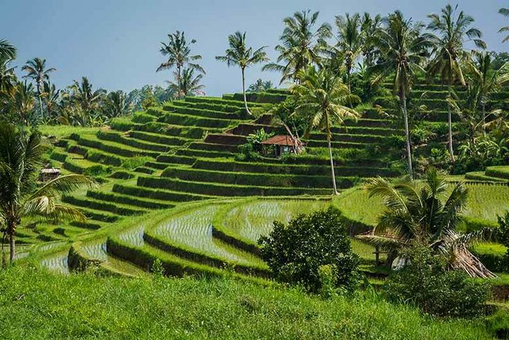 Discount UK Holidays 2017 14nt Luxury Bali Escape with Flights & Breakfast From £599pp (from Weekender Breaks) for a 14nt luxury Bali escape with flights and breakfast or pay a £400pp deposit today - save up to 31%
