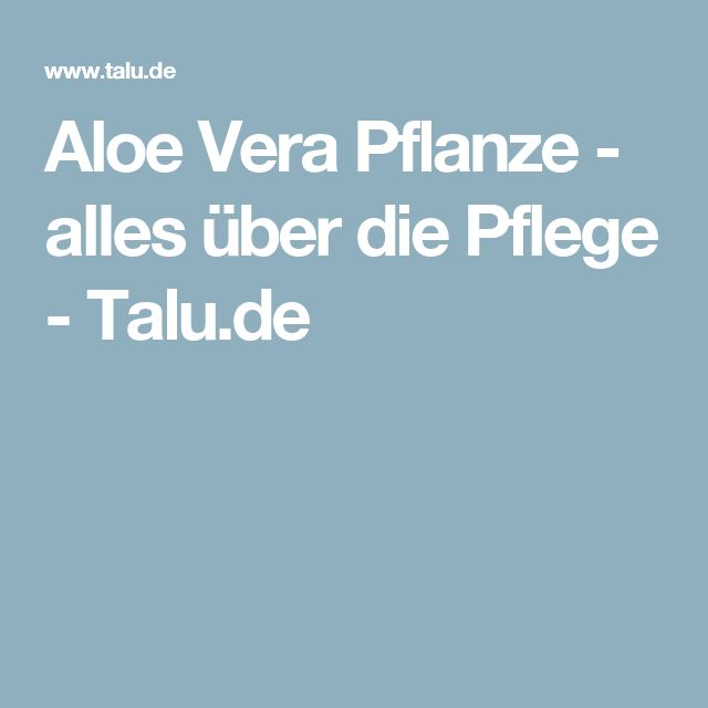 The 25+ Best Ideas About Aloe Vera Pflanze On Pinterest | Aloe ... Aloe Vera Pflanze Pflege Anwendung